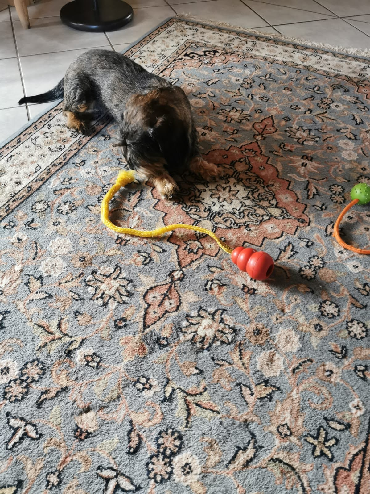 Hella hat viel Arbeit mit dem Knoten