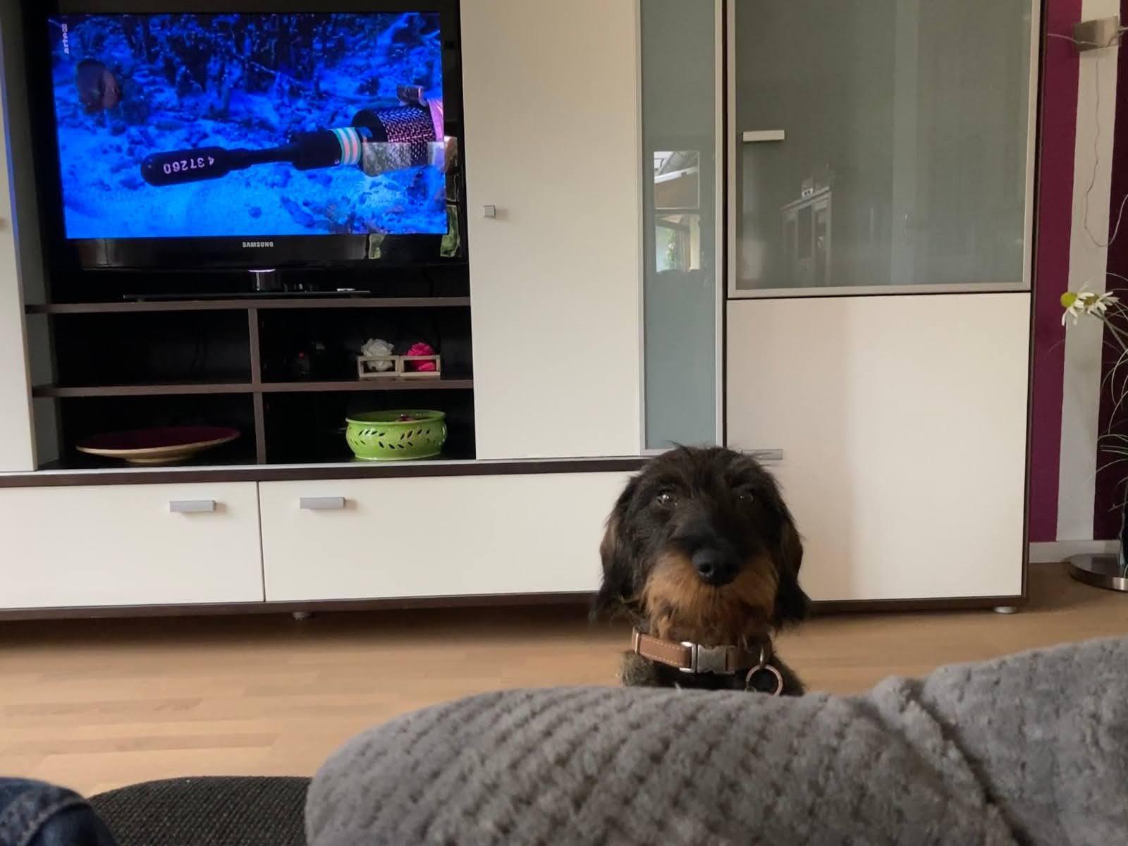Fritz- wann ist den wieder Hundeschule
