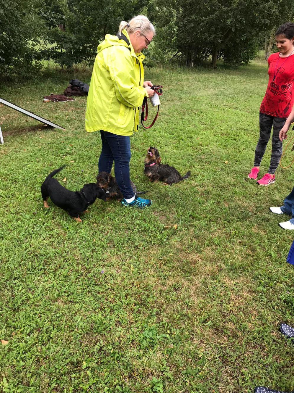 Welpen- und freies Hundetraining