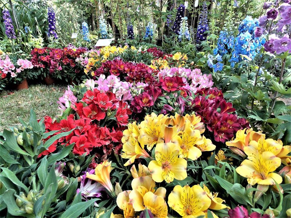 È Sempre Primavera Nel Giardino #Manuflor Anche Se Piove