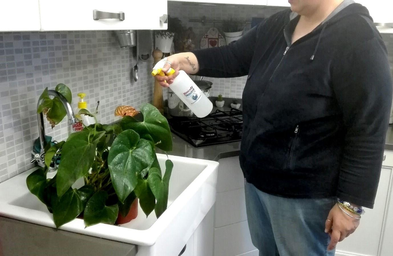 #Manuflor - Alle mie piante, regalo un po' di freschezza, vitalità, salute e forza Stamattina, prima di dedicarmi al vivaio,