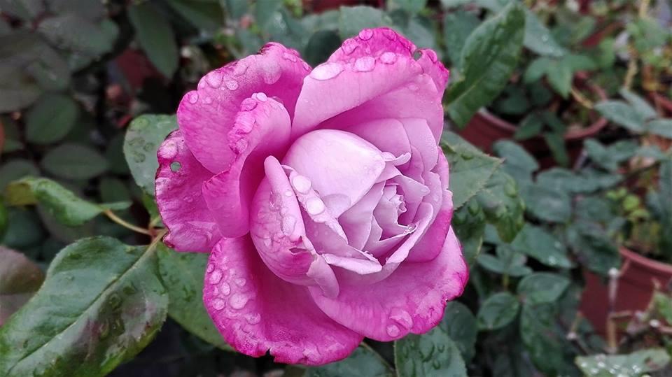 il dopo pioggerella ci regala magie Natura, pioggia ed Acquabase BioladyNeutro: il trio delle meraviglie per risultati spettacolari