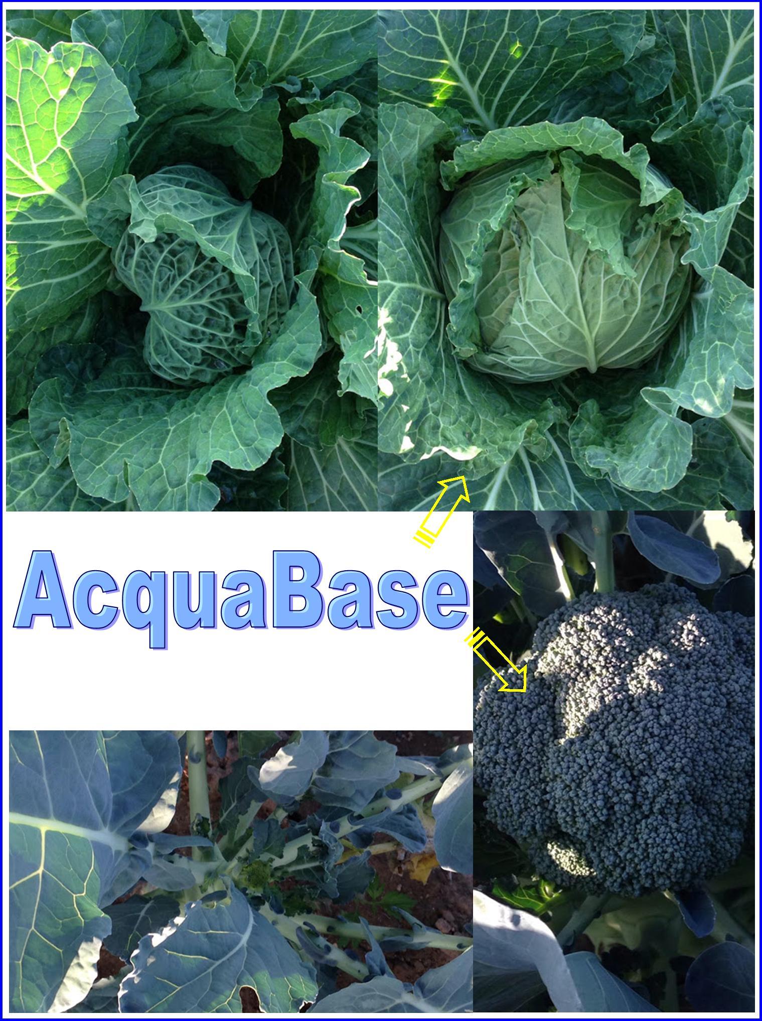 Agricoltura Biologica - Come Aumentarne La Produzione, Con #AcquaBase