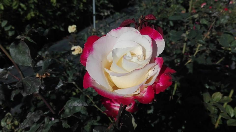 Oggi selezioniamo bianco e rosso  Earth light, Origami, Imperatrice Farah