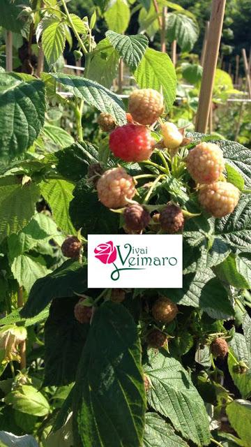 Nei Vivai Veimaro l'Amore e la Passione Per le Piante Con #AcquaBase .....
