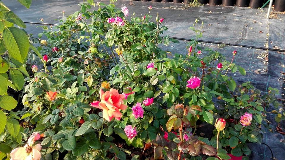 Il giardino stamane 27 Settembre 2017