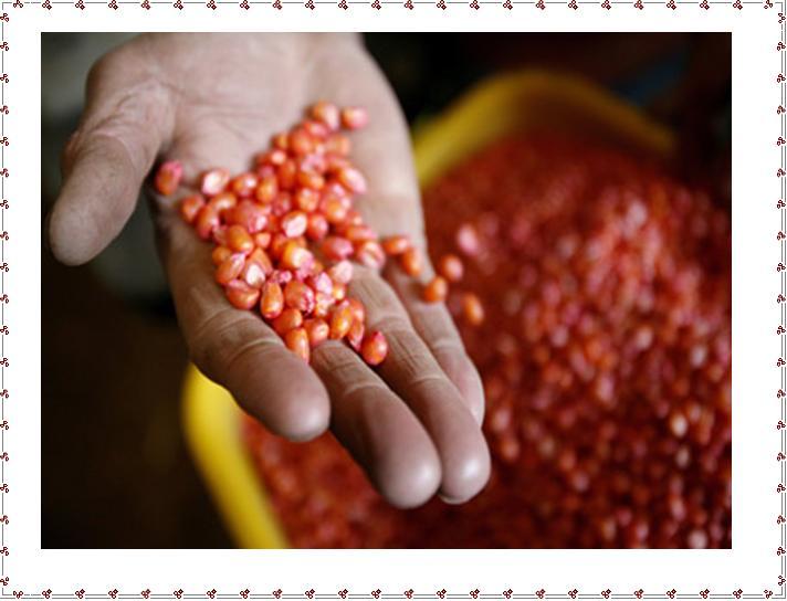 Semi Per Agricoltura Biologica - Ma Come Vi Hanno Conciato?