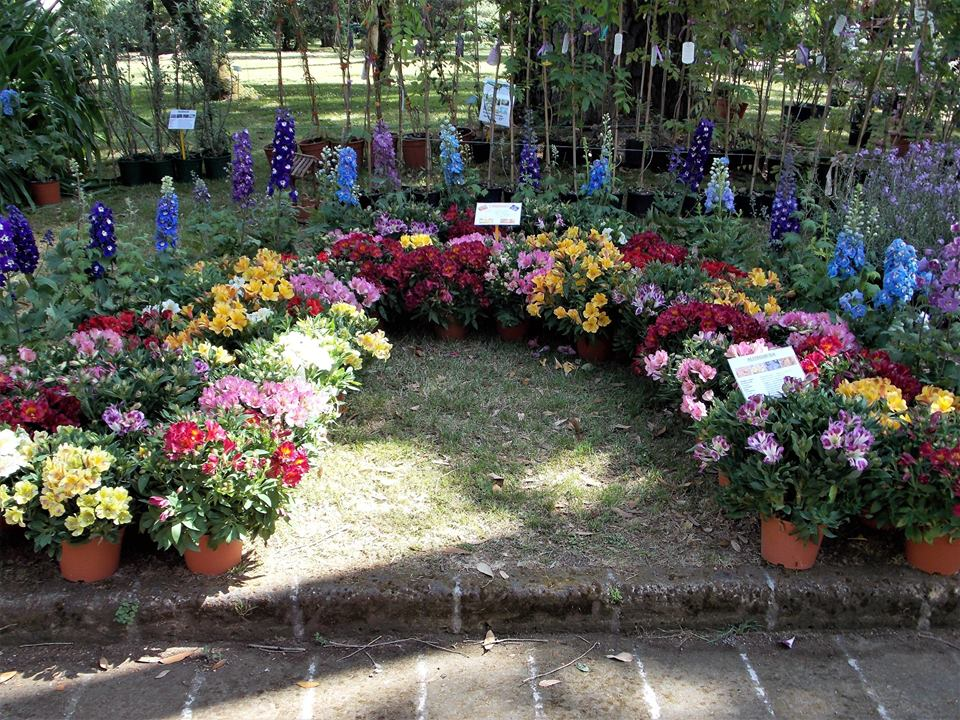 Ricordi di Planta 2013 all'Orto botanico di Napoli
