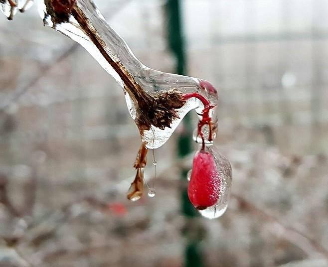 Freddo e Gelo?!? Queste piante resistono fino a -20°