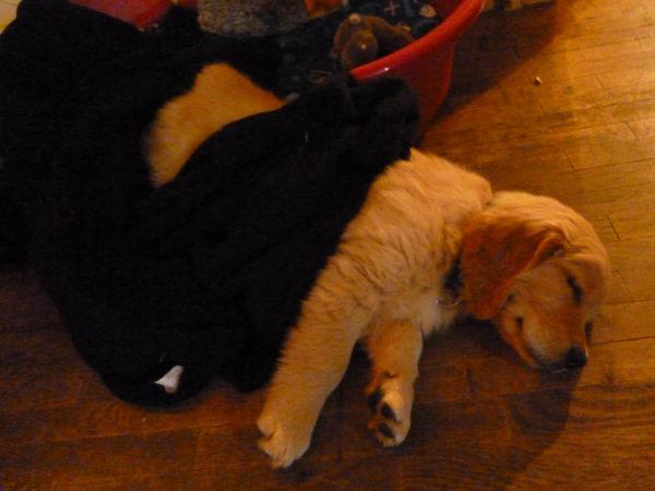 Huggy, le sommeil du juste