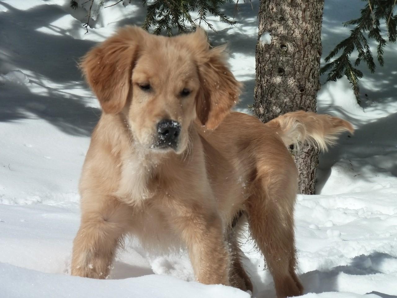 La neige, la passion de Bandit