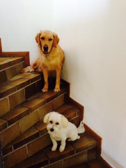Perle et sa grande soeur
