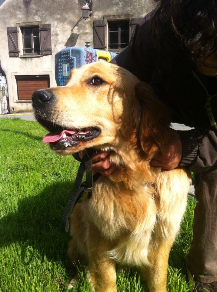 Huggy,  un amour de chien