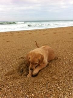 Perle à la plage