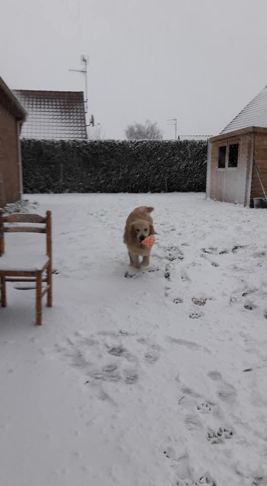 Découverte de la Neige pour Newton