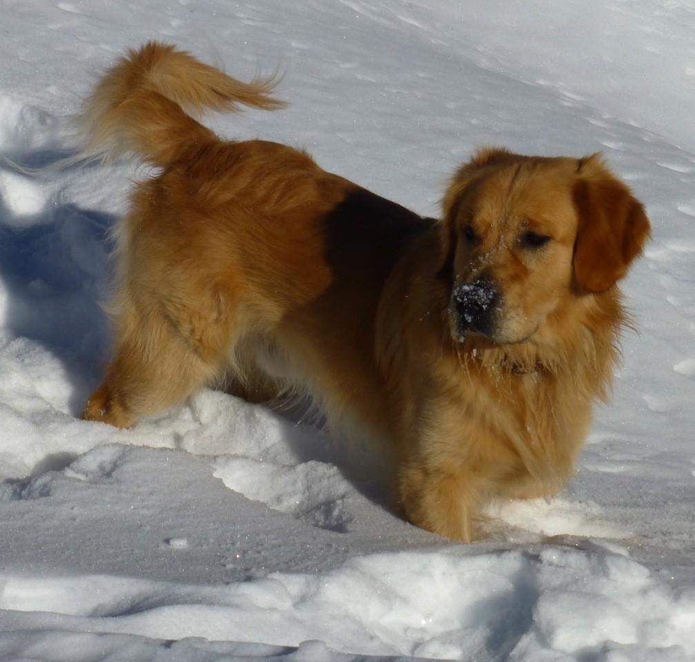 Retour de la neige, pour le + grand bonheur de Bandit