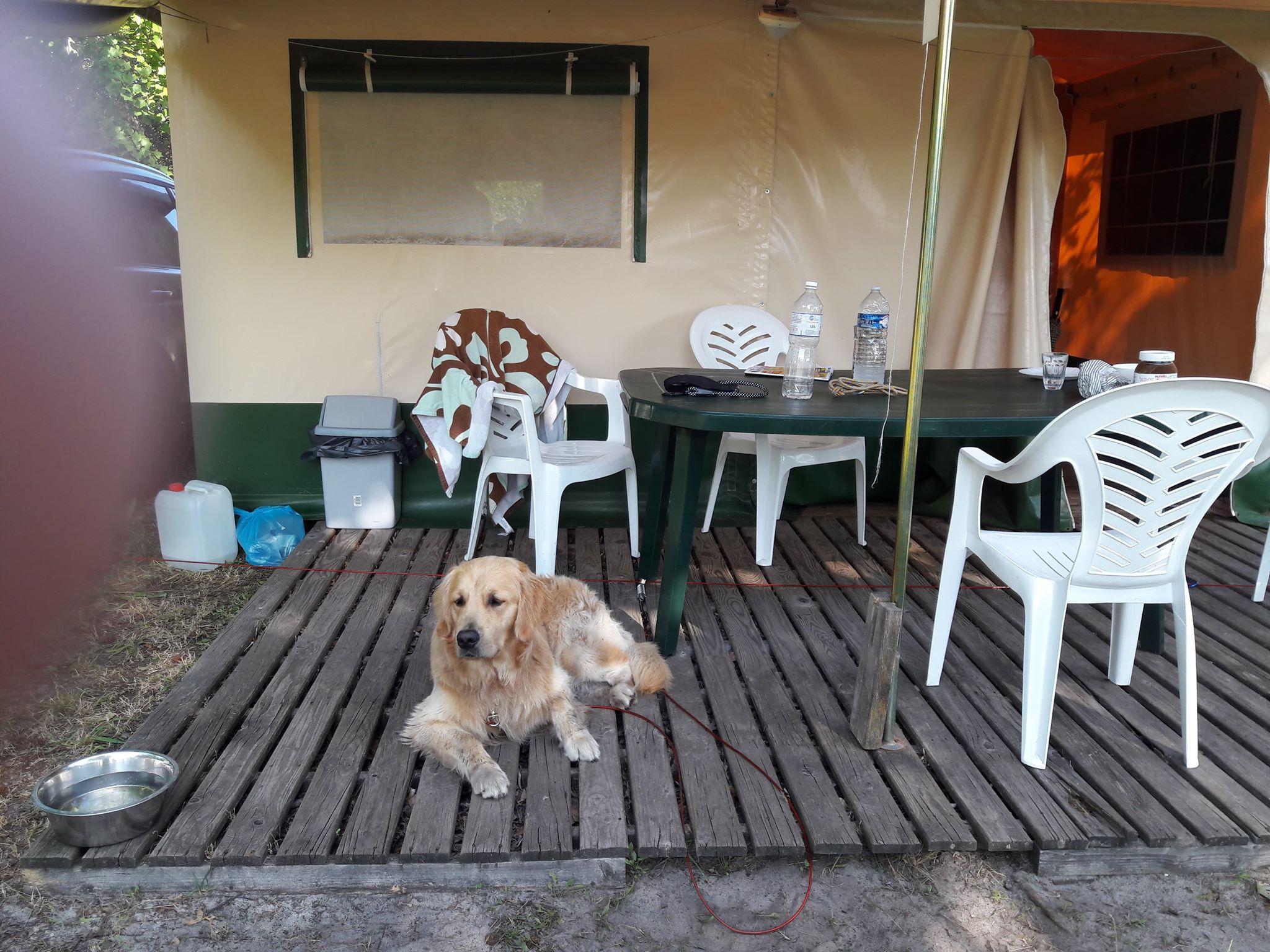 Newton au camping 1