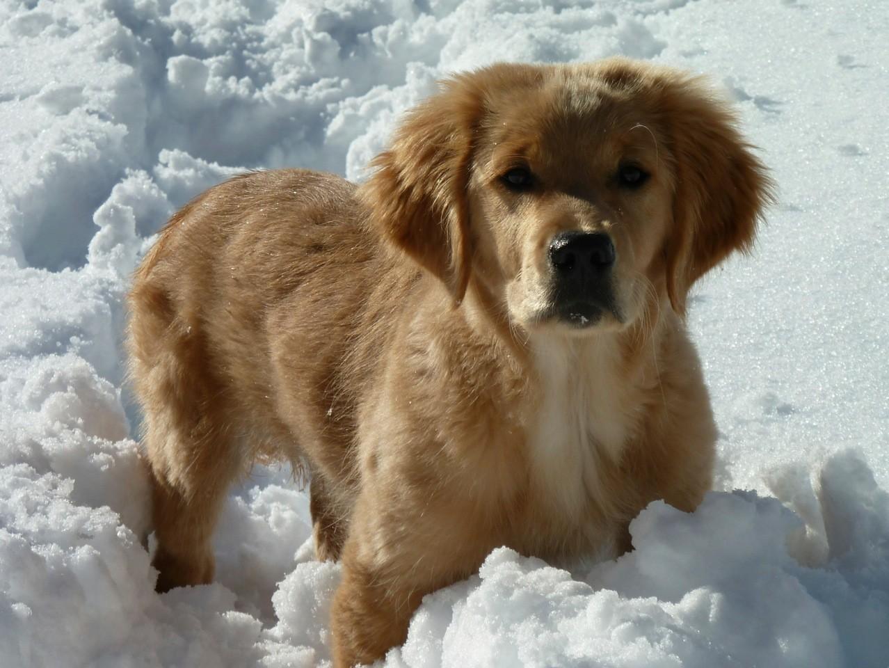 Bandit dans la neige