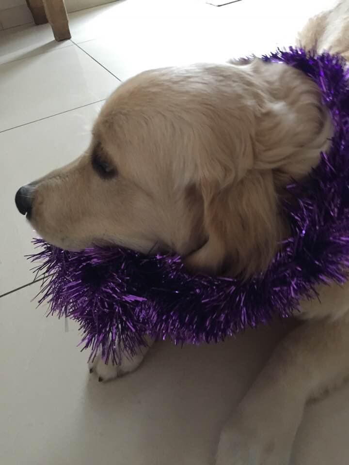 Naspa prépare Noël