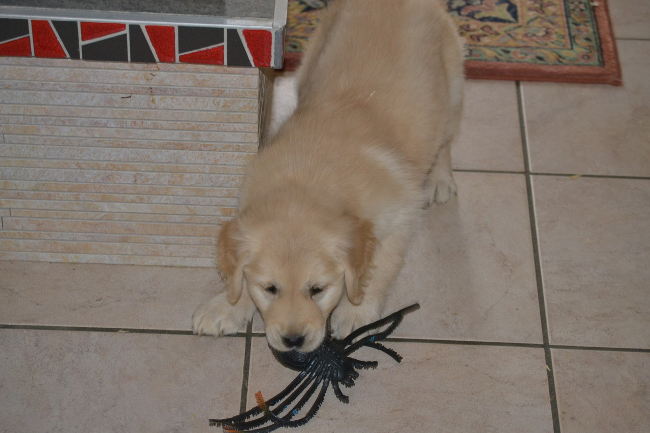 Hidjie et le jouet préféré de sa mère