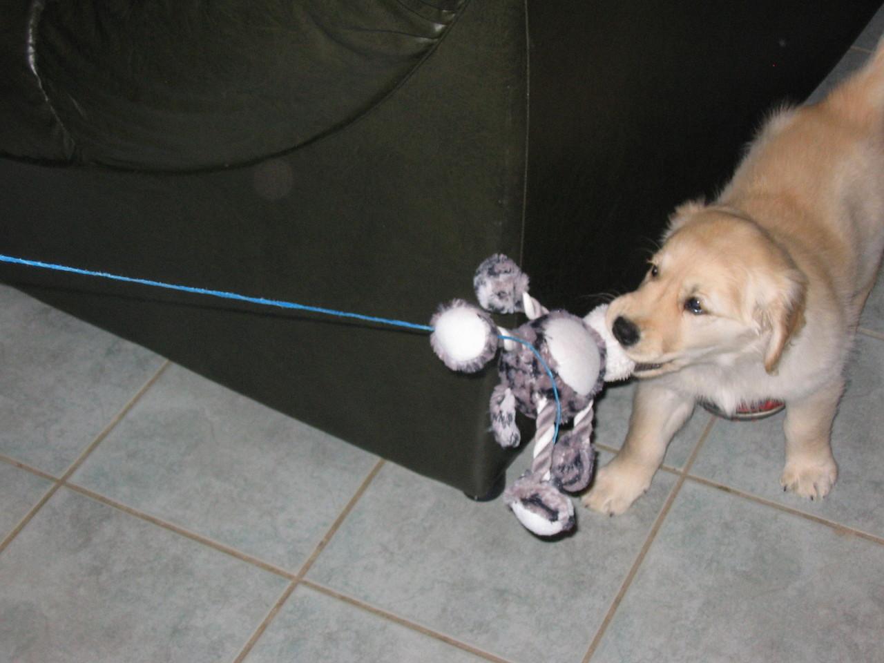 Hidjie et son jouet