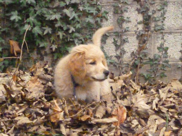 Huggy au jardin 3