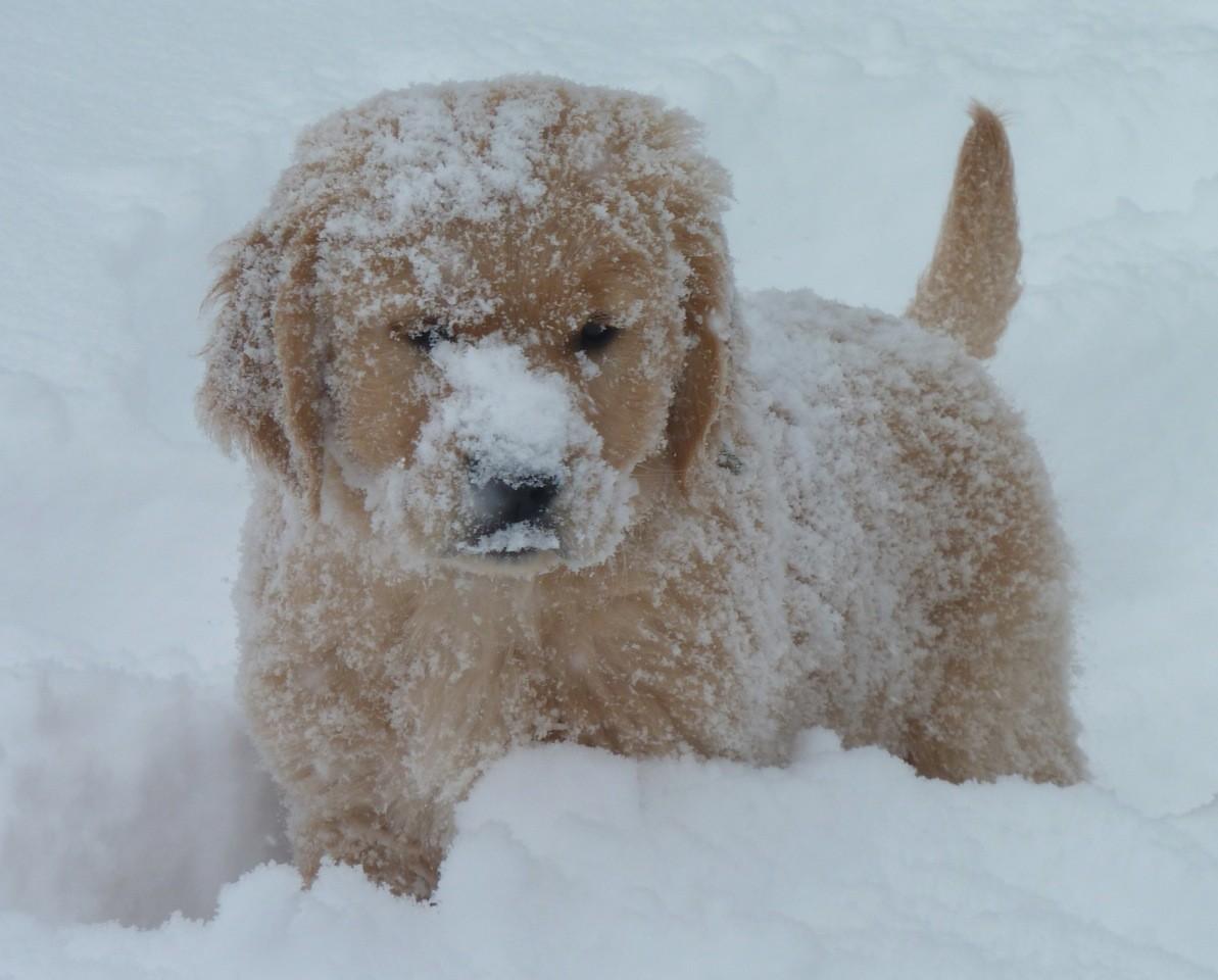 Les joies de la neige: Bandit