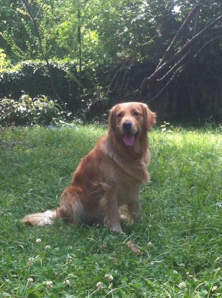 Huggy en son jardin
