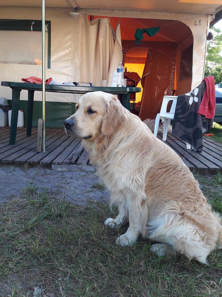 Newton au camping 2