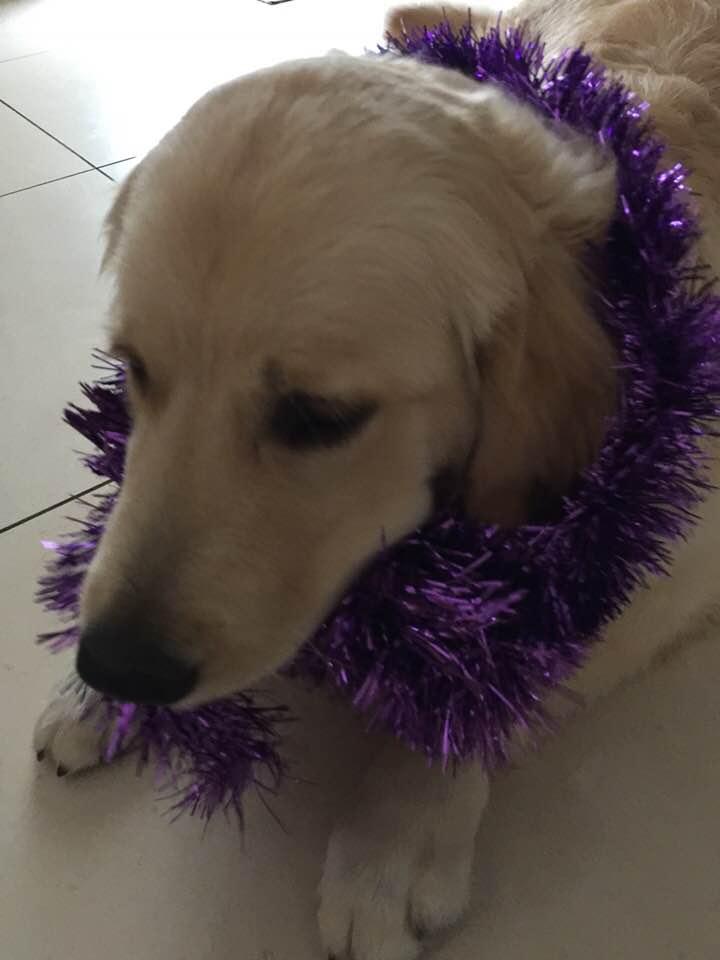 Naspa prépare Noël 2