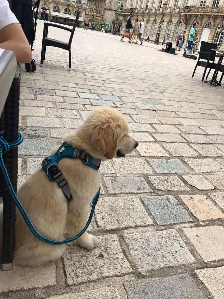 Naspa une promenade en ville