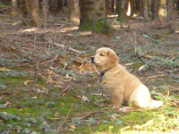 Huggy l'aventurier en forêt