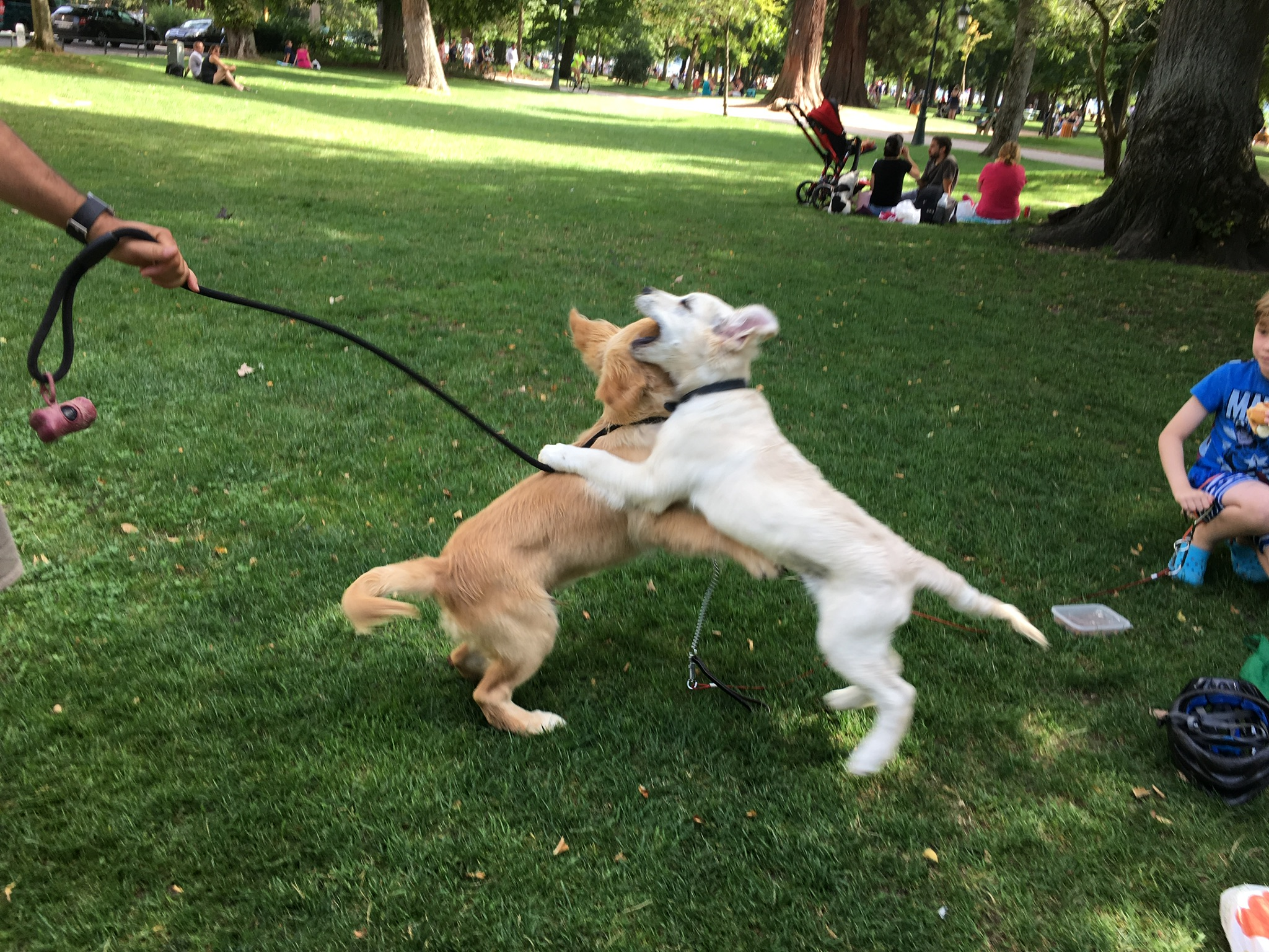 Rencontre au parc