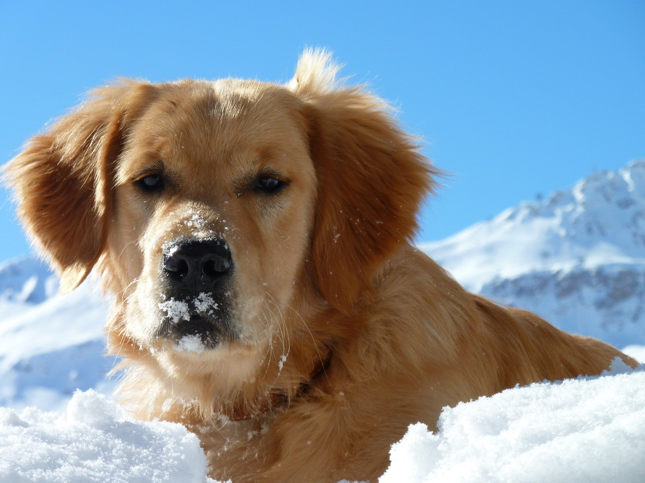 Bandit, la neige lui va si bien
