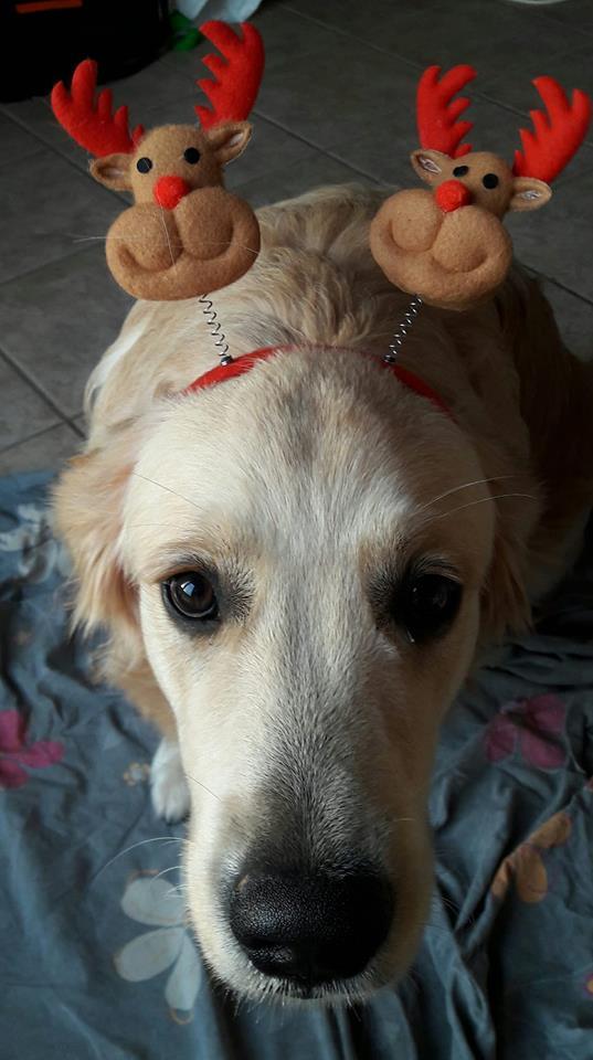 Newton prépare Noël à son tour
