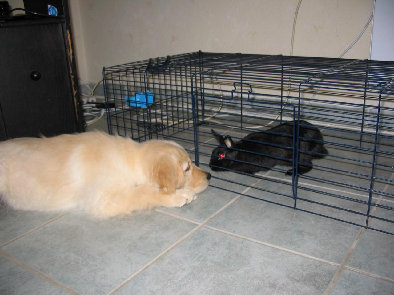 Hidjie et l'un de ses nouveaux amis