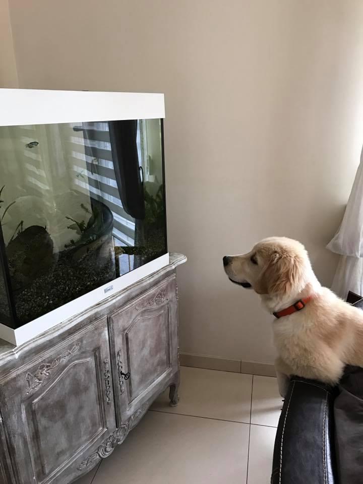 Naspa devant l'aquarium