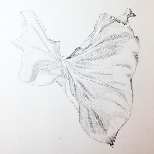 Botanical Art: Calla-Blatt_Bleistiftzeichnung_Anlegen der Schatten