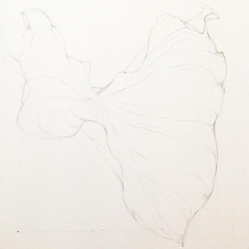 Botanical Art: Calla-Blatt_Bleistiftvorzeichnung