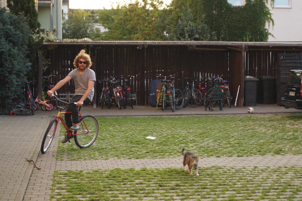 Das Fahrrad und eine schöne Katze.