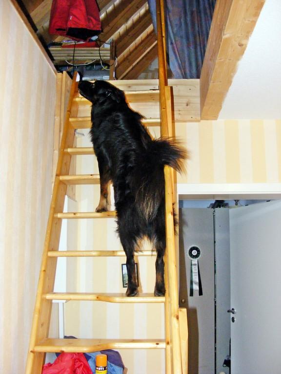 ...er muss doch kontrollieren, ob der Kater oben Unsinn anstellt :-)