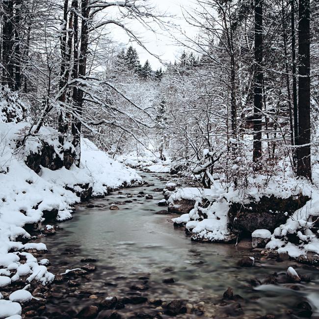Zauberwald, Bayern. Germany 2015