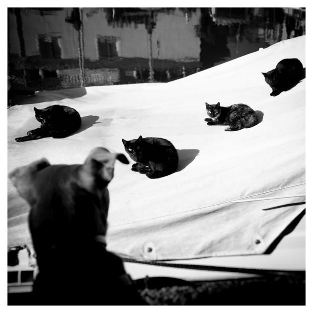 Cuatro gatos y un perro, Port Saplaya 2012