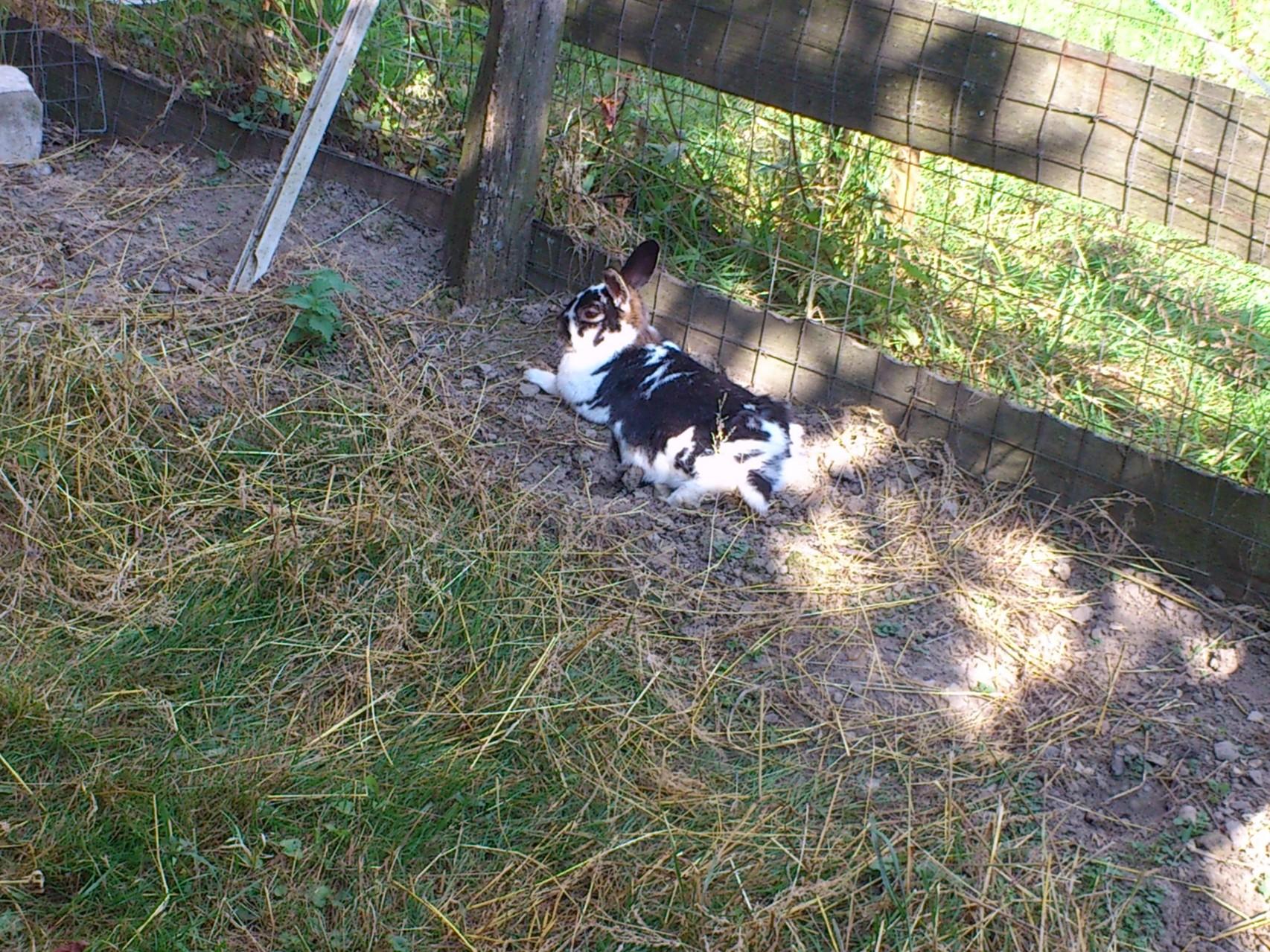 Joschi beim Relaxen in der Sonne.