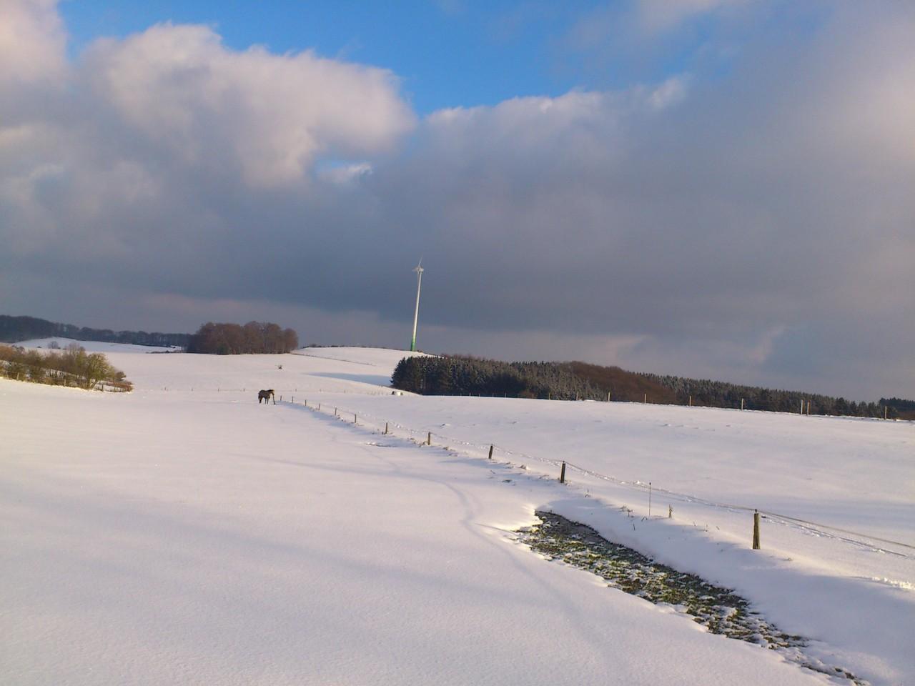 Die verschneiten Hofwiesen