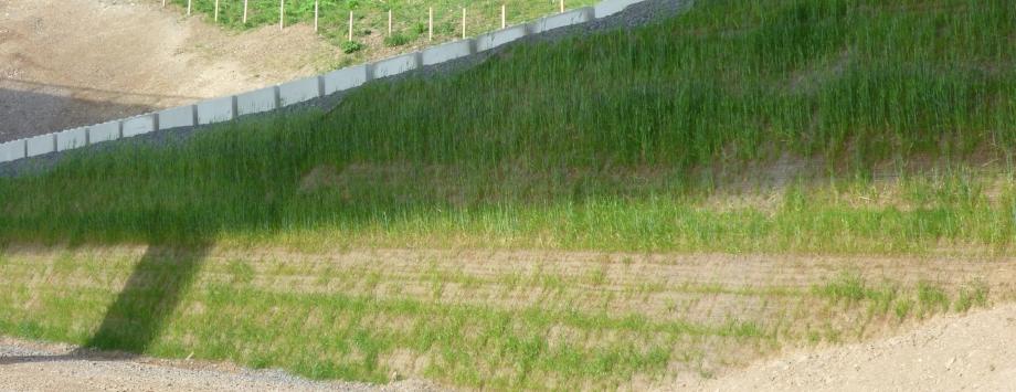 KBE Grün S - beginnende Begrünung mit Saatgutmatte