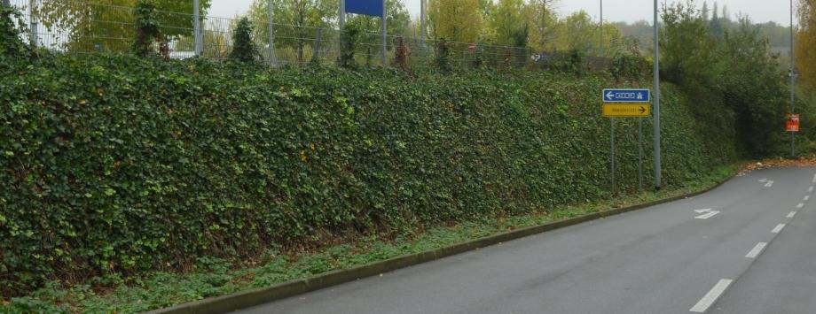 IKEA Duisburg - Bepflanzung mit Efeu