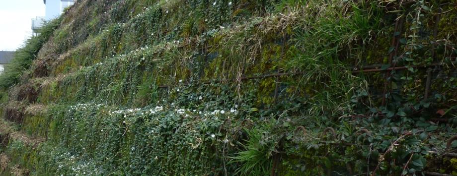 Beispiel für abgetreppte Bauweise mit Bepflanzung durch Bodendecker