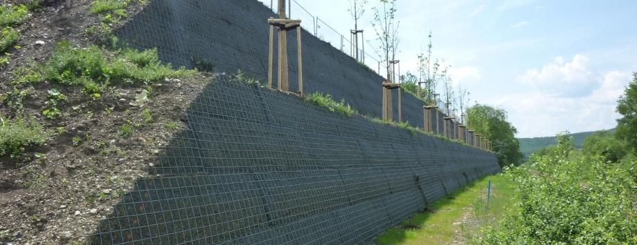 KBE Grün G - beginnende Begrünung nach Bepflanzung mit Rankfplanzen