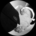 Créer votre société offshore à l'île Maurice : Création de sociétés off shore,, Création de sociétés de défiscalisation à l'île Maurice, Conseils & Assistance pour les démarches et formalités